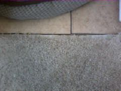Damaged carpet in need of carpet repair