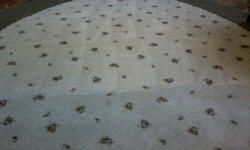 1/2 finished area rug cleaning